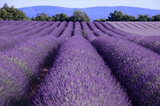 Provence (picture by Ming-yen Hsu on Flickr)
